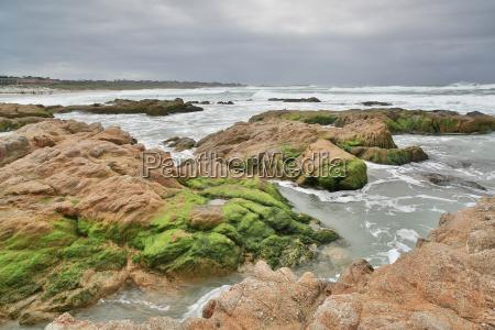 plaża, stanowa, asilomar, półwysep, monterey, kalifornia, Środkowa - 16356751