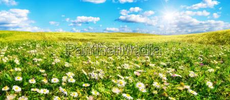 slonce ogrzewa szeroka lake pelna kwiatow