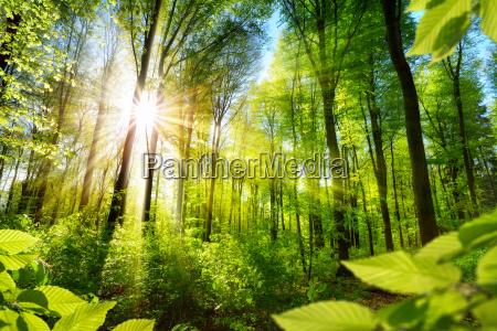 sloneczne drzewa lisciaste w lesie