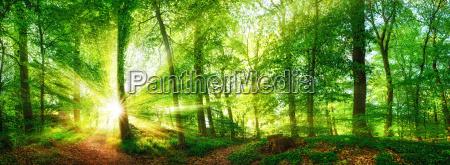 las panorama z promieni slonecznych swiecace