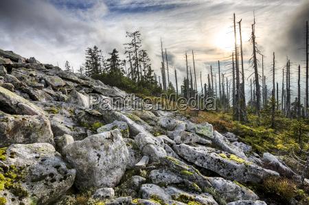 germany bavaria lusen bavarian forest national