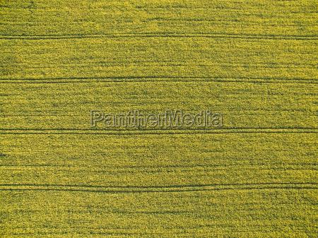 farmland z gory aerial wizerunek bujnej