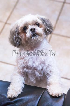 zwierze zwierze domowe kuscheltier pluszak pies