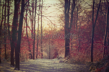 germany footh path in winter forest