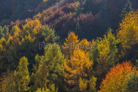 germany rhineland palatinate autumnal mixed forest