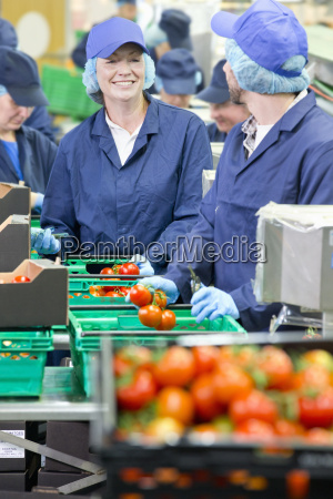smiling workers talking and packing tomatoes