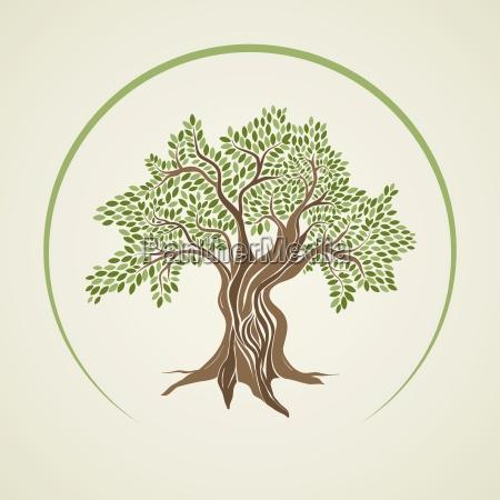 ilustracja wektorowa drzewa oliwnego