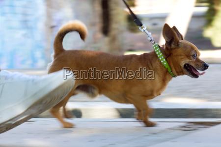 mloda kobieta i piekny pies spaceru