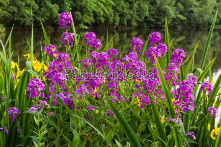 kwiat kwiatek zawod roslina latorosl