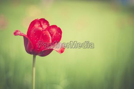 kwiat kwiatek zawod roslina latorosl swiezosc