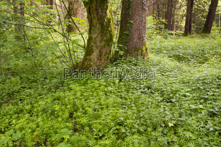 germany bavaria isar floodplains alluvial forest