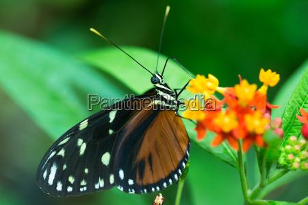 brazowy motyl