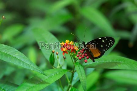 maly motyl
