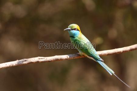 przyroda srodowisko zwierze ptak ptaki safari