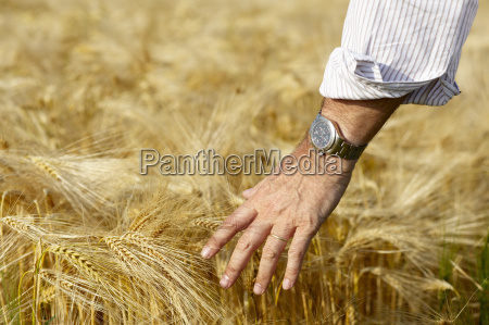 hand of a man caressing the