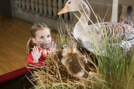 girl looking at stuffed ducks in