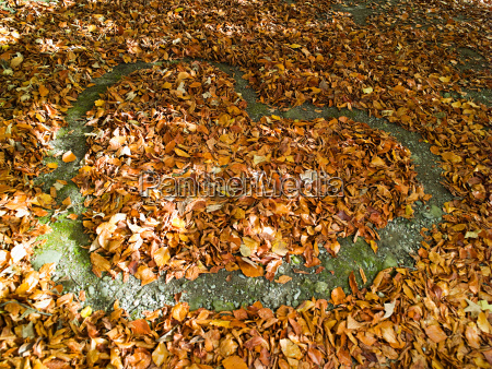 heart shape in the autumn leaves