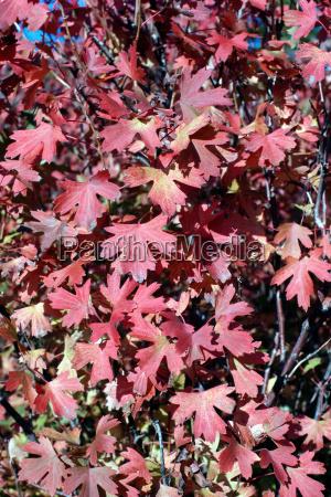 jesienne, liście - 18815950