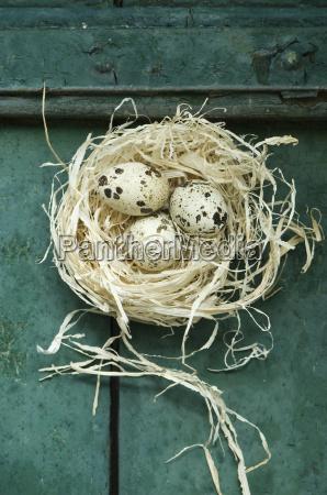 gniazdo wielkanoc z trzech jaj przepiorczych