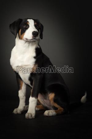 pies psy siodlo sitzplatz szczeniak dzielic