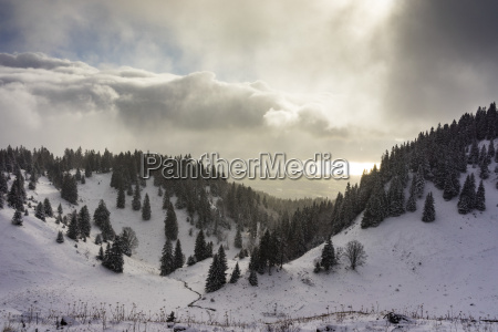 a snowy winters landscape with fir