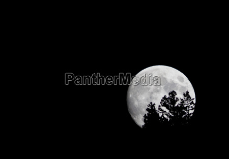the moon rises above trees on