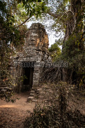 templo arvore pedra buda ao ar