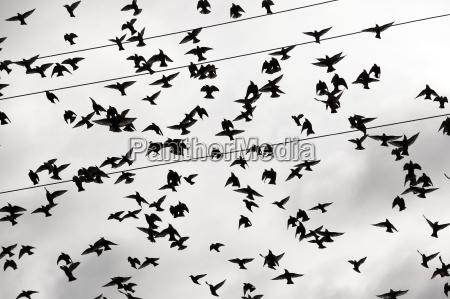 ptaki plywajace na niebie