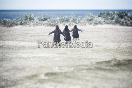 zwierze ptak antarktyda plaza brzegach brzeg