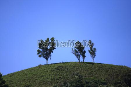 piekny mily drzewo drzewa gora anhoehe
