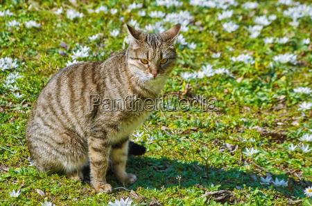 kot na trawniku wsrod bialych kwiatow