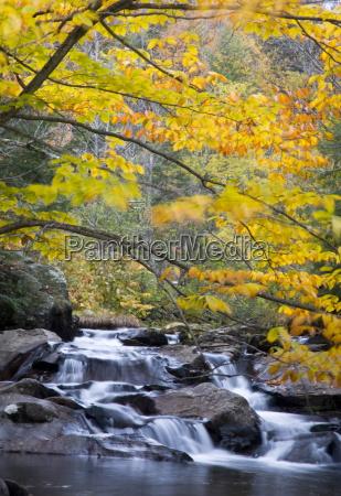jazda podrozowanie drzewo liscie usa potok