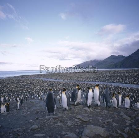 jazda podrozowanie zwierze pingwiny pingwin na