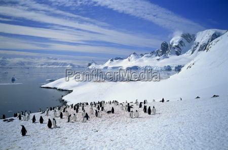 jazda podrozowanie zwierzeta zwierzatka pingwiny ptaki