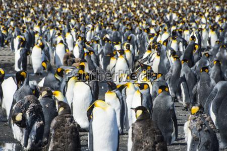jazda podrozowanie kolor zwierze ptak fauna
