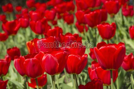 park kwiat kwiatek zawod roslina latorosl