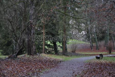 drzewo park liscie niemcy republika federalna