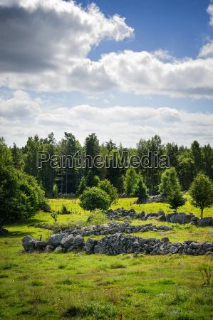 jazda podrozowanie drzewo kamien pestka szwecja