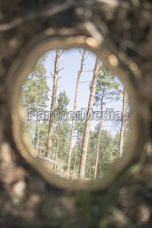 imagen reflejada de los arboles en