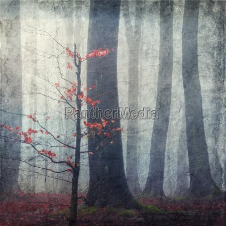 lisc drzewo liscie mgla jesienny niemcy