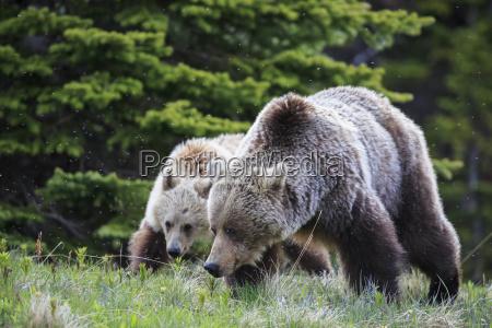 jazda podrozowanie zwierze ssak niedzwiedz park