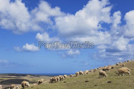 nowa zelandia northland obszar cape reinga