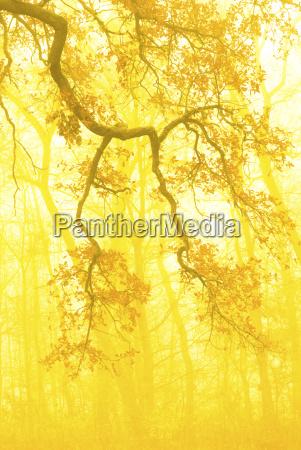 niemcy bawaria jesien las rano mgla
