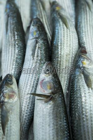 spain balearic islands majorca palma fish