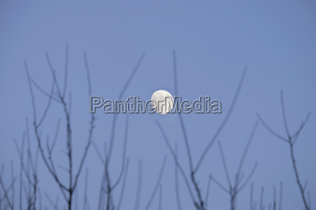 bare twigs and moon in the