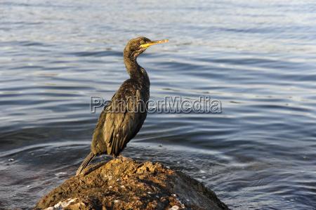 spain seabird perching on rock at