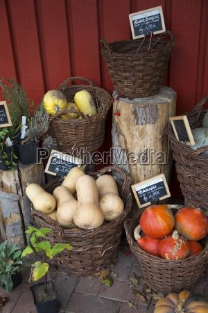 mieszane warzywa organiczne w koszykach wiklinowych