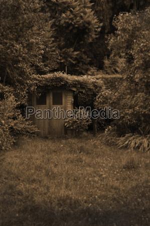 drzewo ogrod ogrodek bayern bawaria niemcy