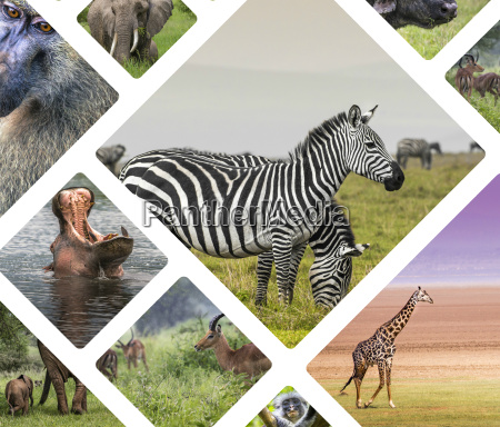 jazda podrozowanie park zwierze ssak fauna