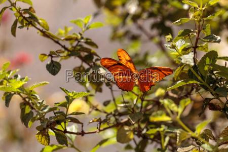 ogrod ogrodek owad motyl skakanie skoki